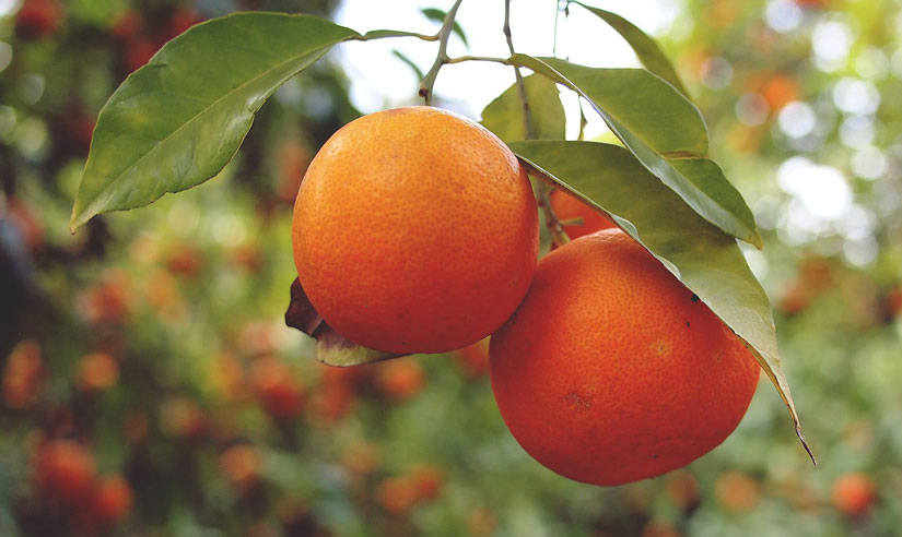 Oranges – Not Just For Breakfast Anymore