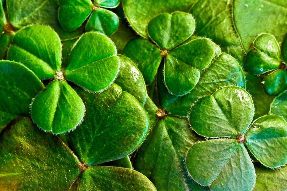 The Irish Apple – St. Patrick's Day Drinks